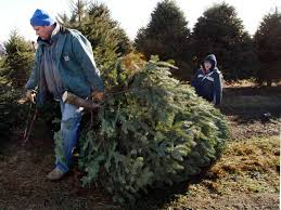live christmas trees where to get live christmas trees in arundel county annapolis