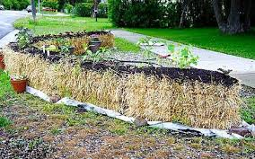 straw bale gardening is it any good telegraph