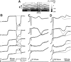 Isoline Map Optical Mapping Of Arrhythmias Induced By Strong Electrical Shocks