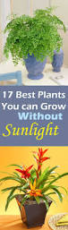 Fragrant Indoor Plants Low Light - 17 beautiful plants you can grow without sun bath room sunlight