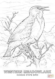 coloring pages bird kansas state bird coloring page free printable coloring pages