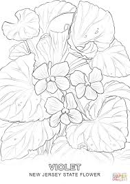 new jersey state flower coloring page free printable coloring pages