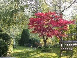 albero giardino creare un giardino con alberi caducifoglie alberi come