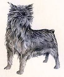 affenpinscher youtube types of small dogs