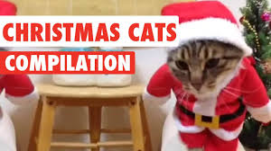 cat christmas christmas cats compilation 2016