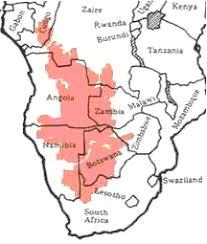 africa map kalahari desert kalahari desert bushman plants animals of the kalahari desert