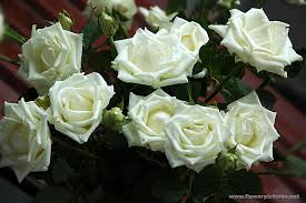 white roses for sale artificial flowers and arrangements for sale and order fresh
