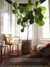 houseplants that need little light tall houseplants for low light the best low maintenance indoor