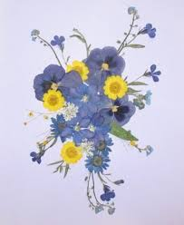 pressed flowers how to use pressed flowers a simple 5 step guide greetings of