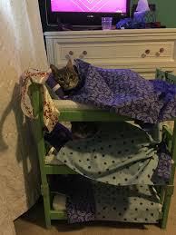 Cat Bunk Bed My Niece Decided That Cats Should Sleep In Bunk Beds Bunk