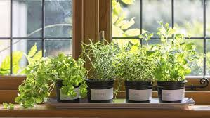 Window Sill Herb Garden by How To Grow Anything Food Gardening For Everyone The Great
