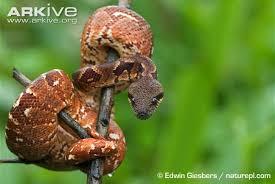 Madagascar Blind Snake Snake Species Madagascar Tree Boa Little Scorpion