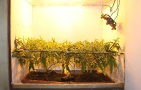 chambre de culture 1m2 10 astuces pour optimiser votre espace de culture de cannabis