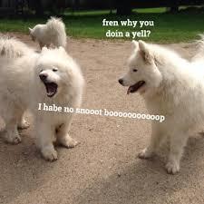 Dog Jokes Meme - doggo news on twitter corg being squished dogsarejoy corgi