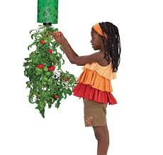 Upside Down Tomato Planter by Topsy Turvy Hanging Upside Down Pepper And Tomato Planter