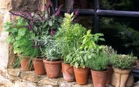 kitchen herb garden kit indoor herb garden kit u2013 itsfashion club