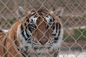 South Carolina wild animals images Victory south carolina bans private ownership of wild animals png