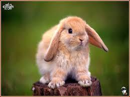 bunny search bunny url txt at master richardsun29 bunny search