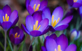 purple flowers purple flowers 14041 1600x1000 px hdwallsource