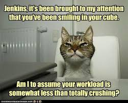 Working Cat Meme - 53 best working cats images on pinterest cats kittens and cat