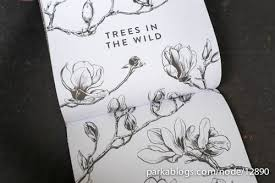 book review drawing trees and leaves observing and sketching the