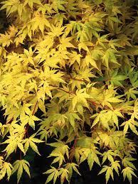 Heat Loving Plants by Best Plants For Wet Soil What To Plant In Wet Soil Hgtv