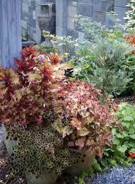 Vegetable Pot Gardening For Beginners Ten Container Gardening Tips For Beginners