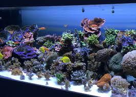 led lights for coral tanks aquaray aquarium led reef central my aquarium opinions