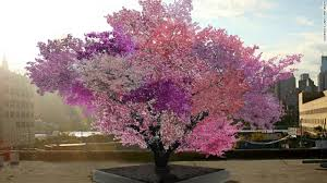 different types of trees growing 40 types of fruit on one tree cnn