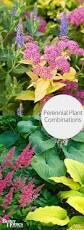 perennial plant combinations perennials landscape designs and
