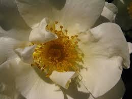 Real Flower Petal Confetti - the confetti blog june 2013
