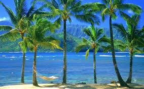 different types of trees pictures of different types of palm trees great inspire
