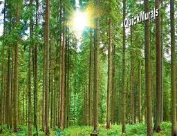 28 forest murals for walls forest wall murals for a serene forest murals for walls morning forest peel and stick wall mural