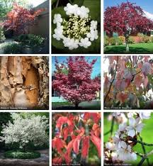 8 great all season trees arbor day