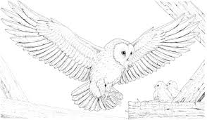 owl coloring pages coloringsuite com