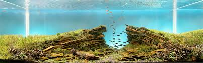 Aquascaping World We Are Getting Creamed In The Aquascaping Department News Planted
