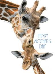 s day giraffe and baby giraffe happy s day cards painting by