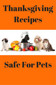 thanksgiving pet photos 55 best animal safety images on pinterest pet health safety and