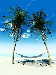 palm tree hammock beatiful tree