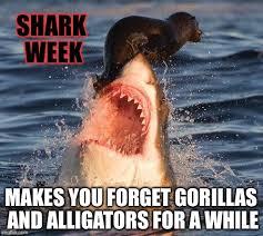 Shark Week Meme - shark week imgflip