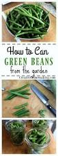 best 25 gardening for beginners ideas on pinterest vegetable