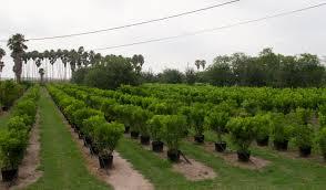 texas native plants nursery texas natural growers u2013 specializing in specimen quality texas