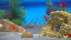 Home Aquarium Inspirational Aquarium For Your Home 20 On With Aquarium For Your