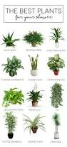 blog plants gardens and house