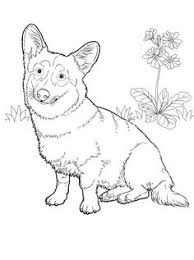 dog breed coloring pages coloring furry friends