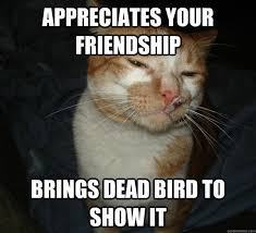 Cat Facts Meme - why do cats do this funny animals pinterest funny animal cat