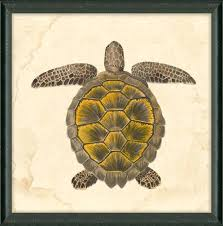 tortoise home decor sea turtle home decor home decoration ideas india sintowin