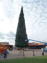 arizona s largest tree arrives at anthem outlets