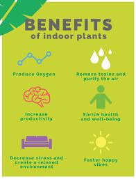 benefits of houseplants greening greenhouse studios greenhouse studios