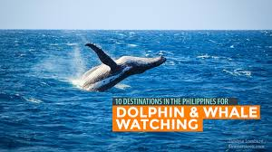 best 20 whale watching destinations ideas on pinterest u2014no signup